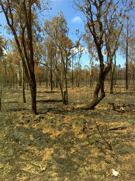 Fire affected some 61% of the cape in 2009.  Photo shows a fire affected property in Cape York showing loss of groundcover.