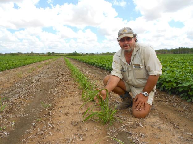IMAGE1_Joe Muscat Mackay cane farmer